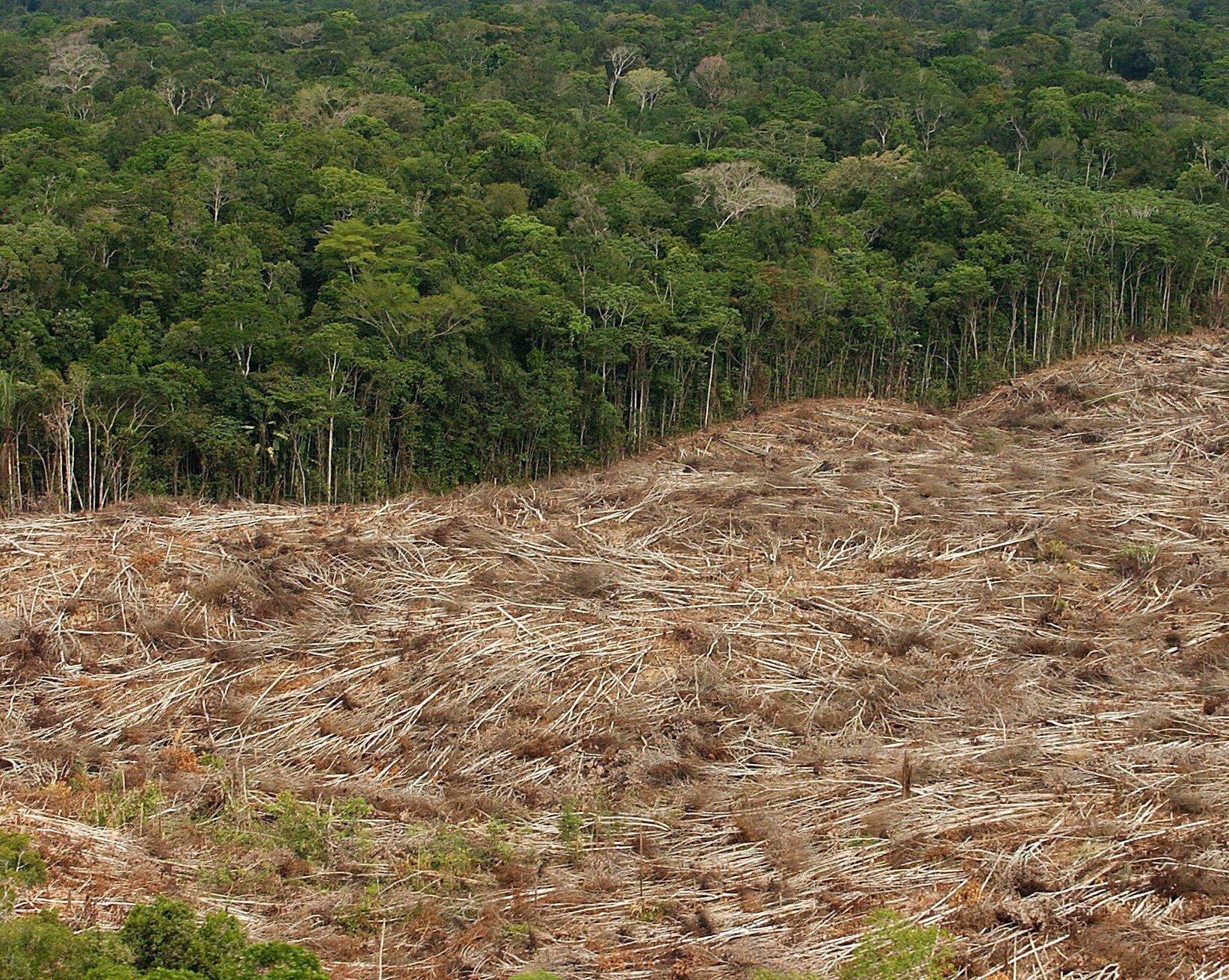 Amazonas-Gold: Das schmutzige Geschäft in Brasiliens Regenwald