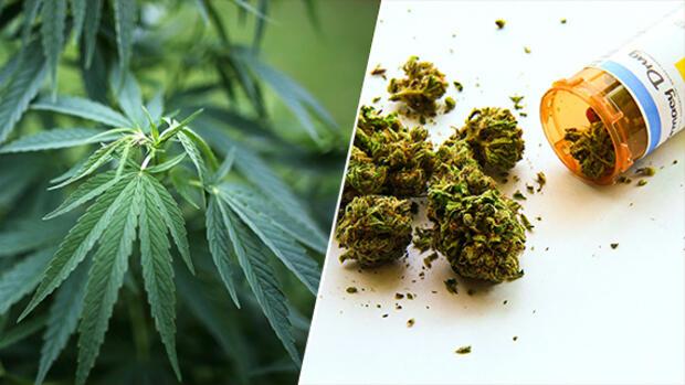 Bildergebnis für Cannabis als Medizin