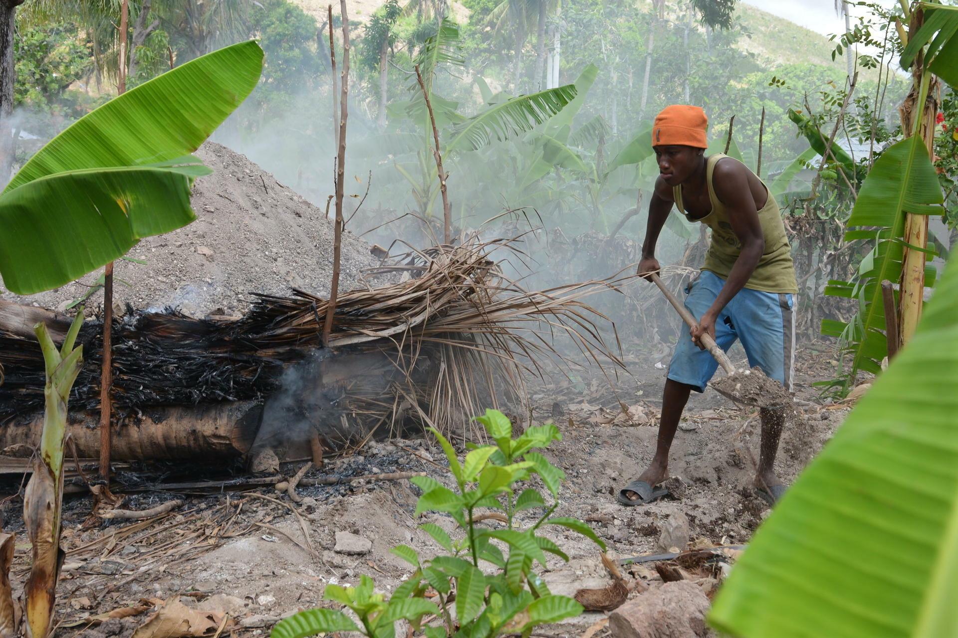"""abholzung für """"energie-wälder"""": holzkohle in haiti besser als ihr ruf"""