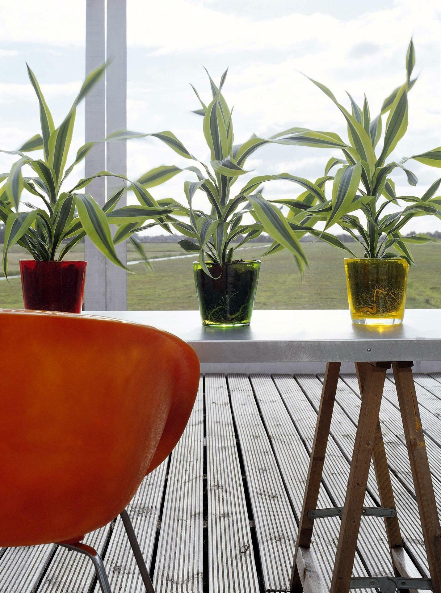 emejing pflanzen f r gute raumluft contemporary. Black Bedroom Furniture Sets. Home Design Ideas