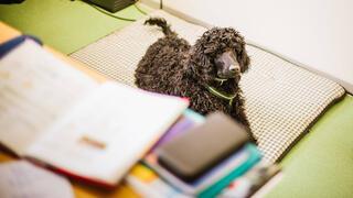 Steuern und Recht kompakt: Schulhund, Untermiete, Hinterbliebenenrente