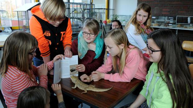 """Für die Bartagame-Echse - hier an der Haupt- und Realschule in Zetel - könnte es eng werden, wenn wie künftig in Finnland, nur noch """"Phänomene"""" mit Bezug zum späteren Arbeitsleben unterrichtet werden. Quelle: dpa"""