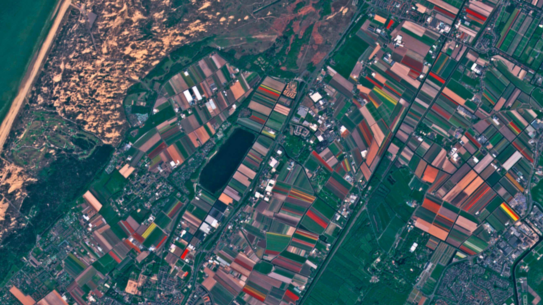 Nicht umsonst gelten die Niederlande auch als Blumenladen der Welt. Selbst aus dem All sind die vielen bunten Felder im Frühjahr zu erkennen.