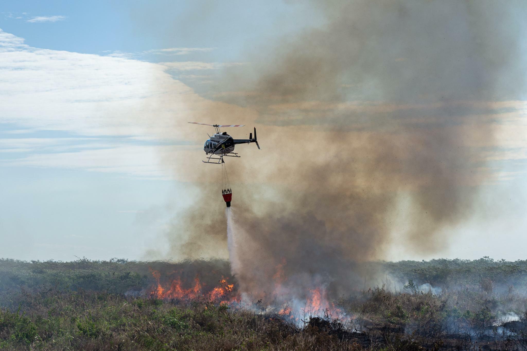 Amazonasgebiet: Umweltministerin lässt Förderung für Amazonas-Regenwald auf Eis